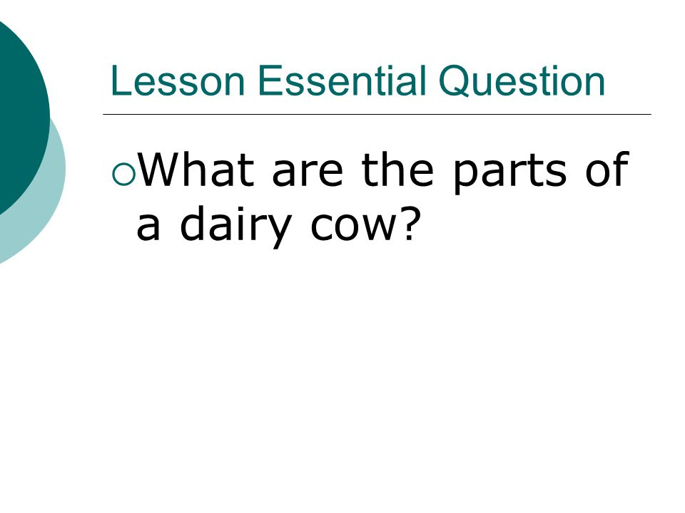 Lesson Essential Question  What are the parts of a dairy cow