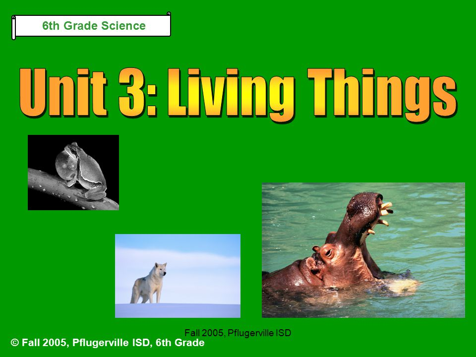 Chapter 7 Section 3Fall 2005, Pflugerville ISD The Organization of Living Things Protective Tissue