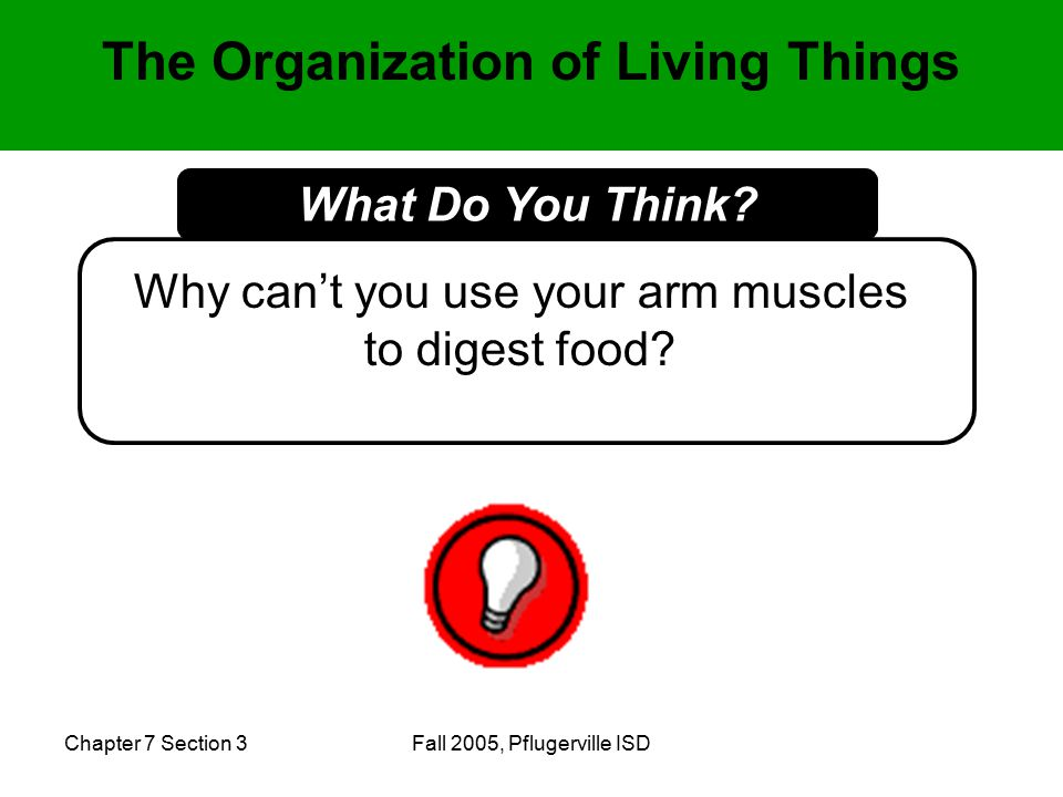 Chapter 7 Section 3Fall 2005, Pflugerville ISD The Organization of Living Things Why can't you use your arm muscles to digest food.
