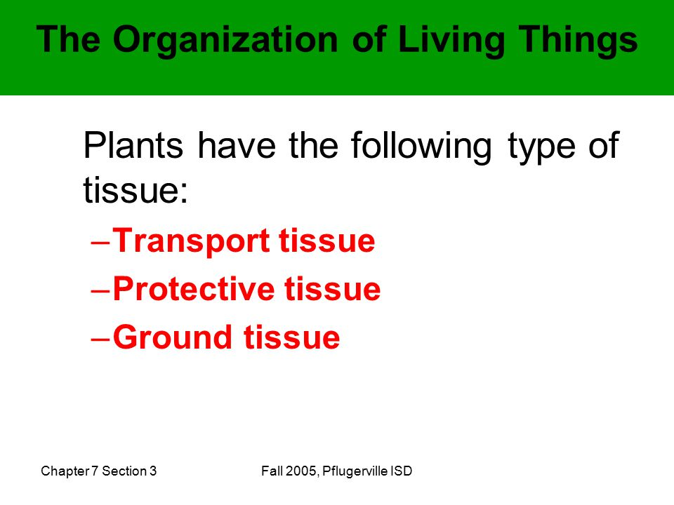 Chapter 7 Section 3Fall 2005, Pflugerville ISD Plants have the following type of tissue: –Transport tissue –Protective tissue –Ground tissue The Organization of Living Things