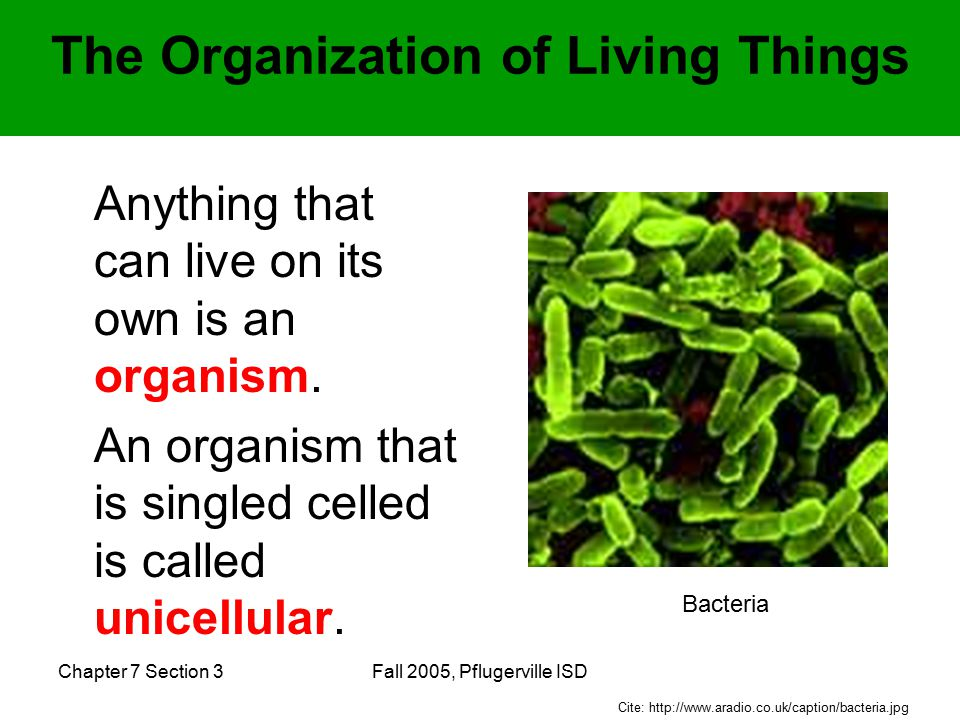 Chapter 7 Section 3Fall 2005, Pflugerville ISD The Organization of Living Things Anything that can live on its own is an organism.