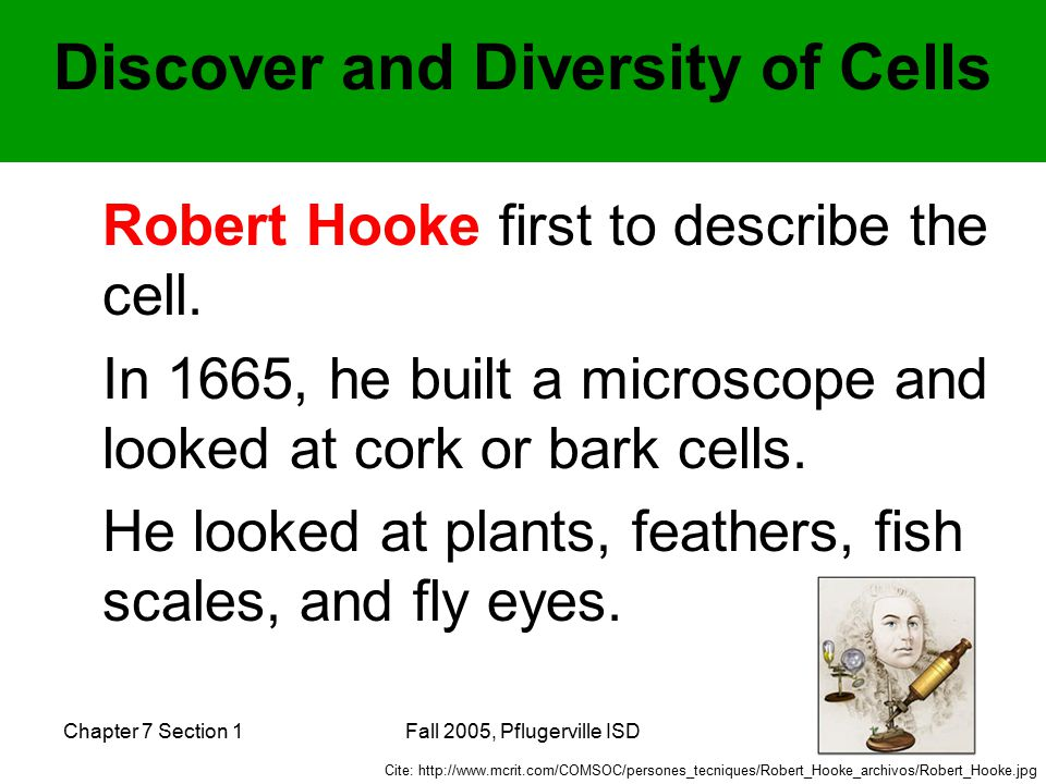 Chapter 7 Section 1Fall 2005, Pflugerville ISD Anton van Leeuwenhook- looked at protist under his own microscope.