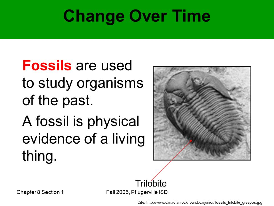 Chapter 8 Section 1Fall 2005, Pflugerville ISD Change Over Time Fossils are used to study organisms of the past.