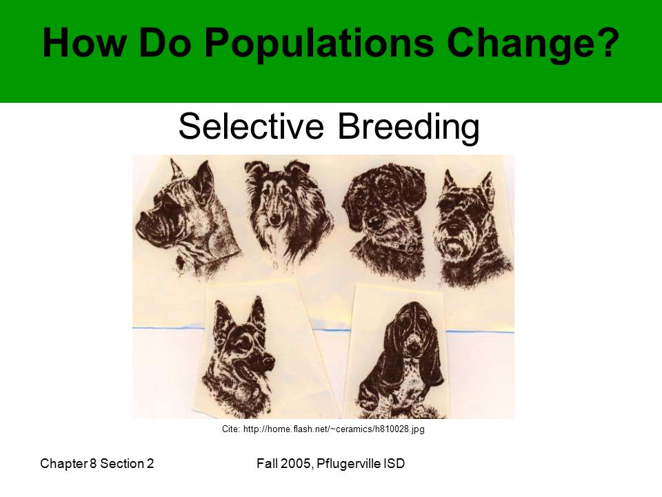 Chapter 8 Section 2Fall 2005, Pflugerville ISD How Do Populations Change.