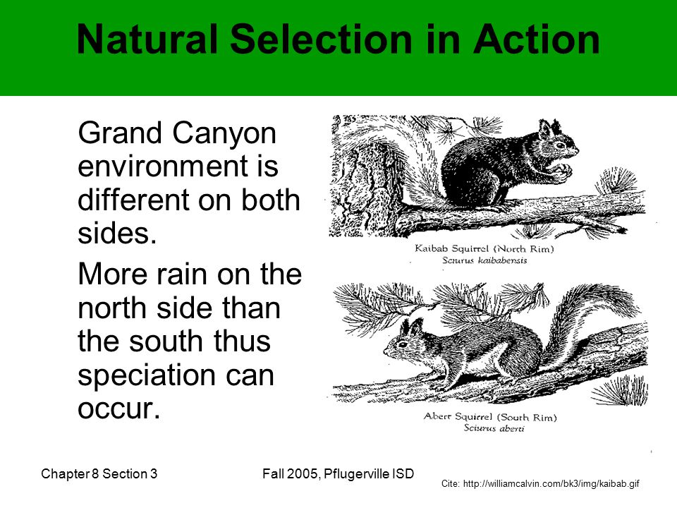 Chapter 8 Section 3Fall 2005, Pflugerville ISD Natural Selection in Action Grand Canyon environment is different on both sides.