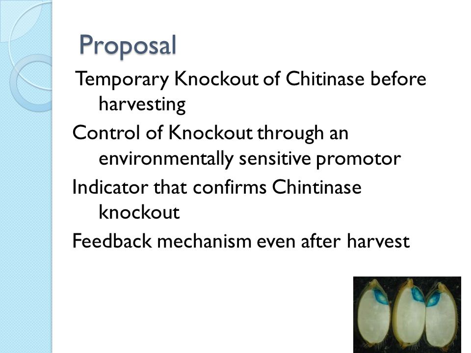 Proposal Temporary Knockout of Chitinase before harvesting Control of Knockout through an environmentally sensitive promotor Indicator that confirms Chintinase knockout Feedback mechanism even after harvest