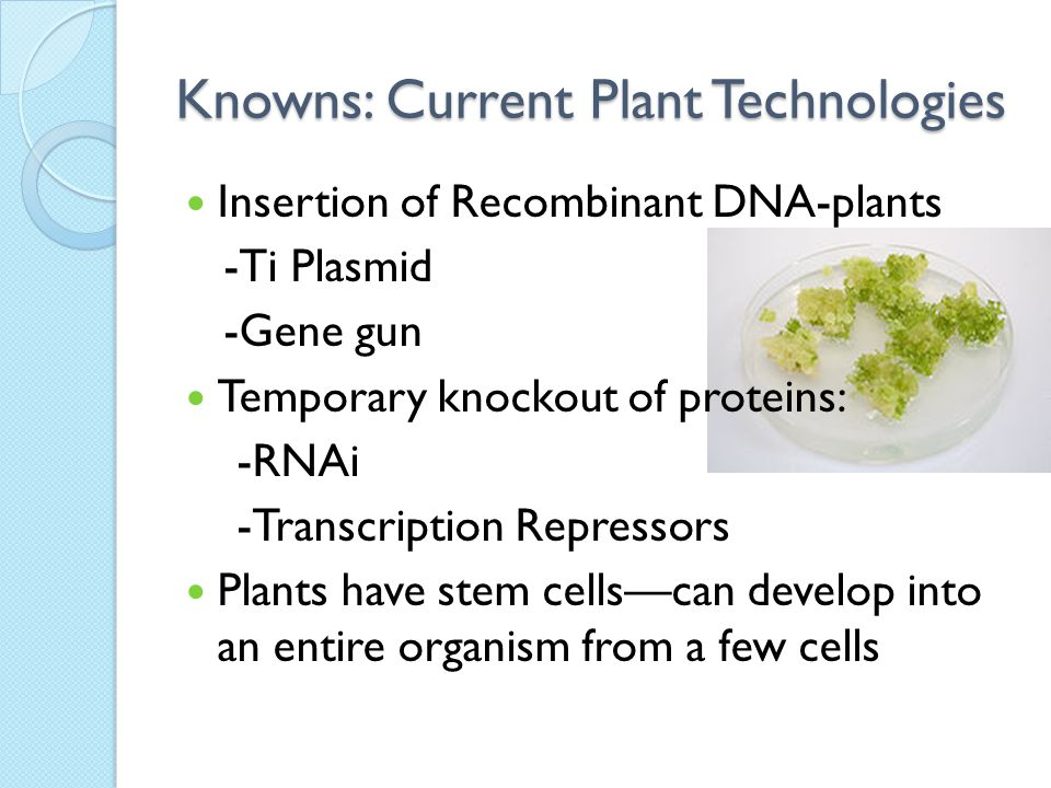 Knowns: Current Plant Technologies Insertion of Recombinant DNA-plants -Ti Plasmid -Gene gun Temporary knockout of proteins: -RNAi -Transcription Repressors Plants have stem cells—can develop into an entire organism from a few cells
