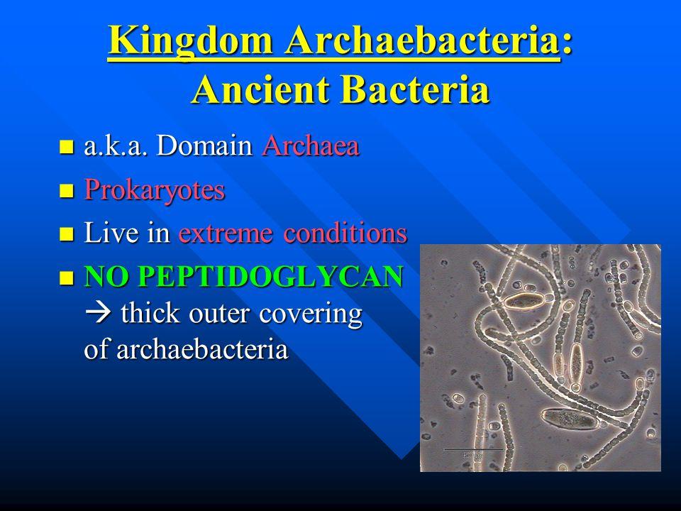 Kingdom Archaebacteria: Ancient Bacteria a.k.a. Domain Archaea a.k.a.