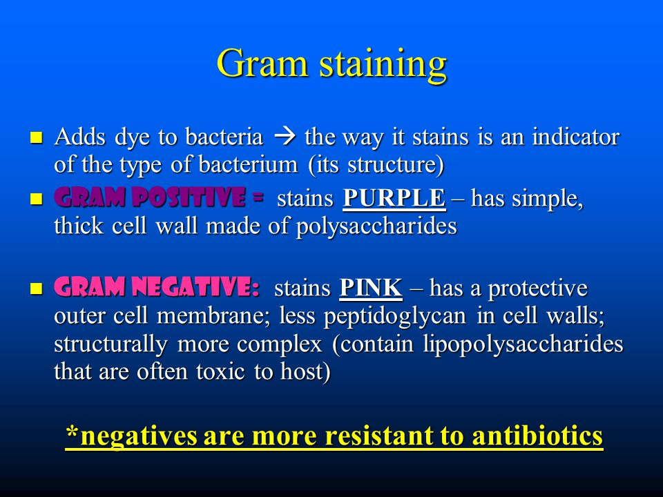 Gram staining Adds dye to bacteria  the way it stains is an indicator of the type of bacterium (its structure) Adds dye to bacteria  the way it stains is an indicator of the type of bacterium (its structure) Gram positive = stains PURPLE – has simple, thick cell wall made of polysaccharides Gram positive = stains PURPLE – has simple, thick cell wall made of polysaccharides Gram negative: stains PINK – has a protective outer cell membrane; less peptidoglycan in cell walls; structurally more complex (contain lipopolysaccharides that are often toxic to host) Gram negative: stains PINK – has a protective outer cell membrane; less peptidoglycan in cell walls; structurally more complex (contain lipopolysaccharides that are often toxic to host) *negatives are more resistant to antibiotics