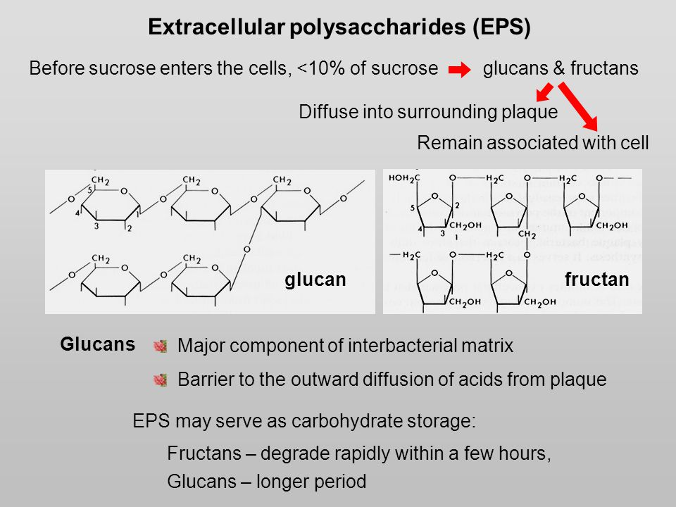Extracellular polysaccharides (EPS) glucanfructan EPS may serve as carbohydrate storage: Fructans – degrade rapidly within a few hours, Glucans – longer period Major component of interbacterial matrix Barrier to the outward diffusion of acids from plaque Glucans Before sucrose enters the cells, <10% of sucrose glucans & fructans Remain associated with cell Diffuse into surrounding plaque