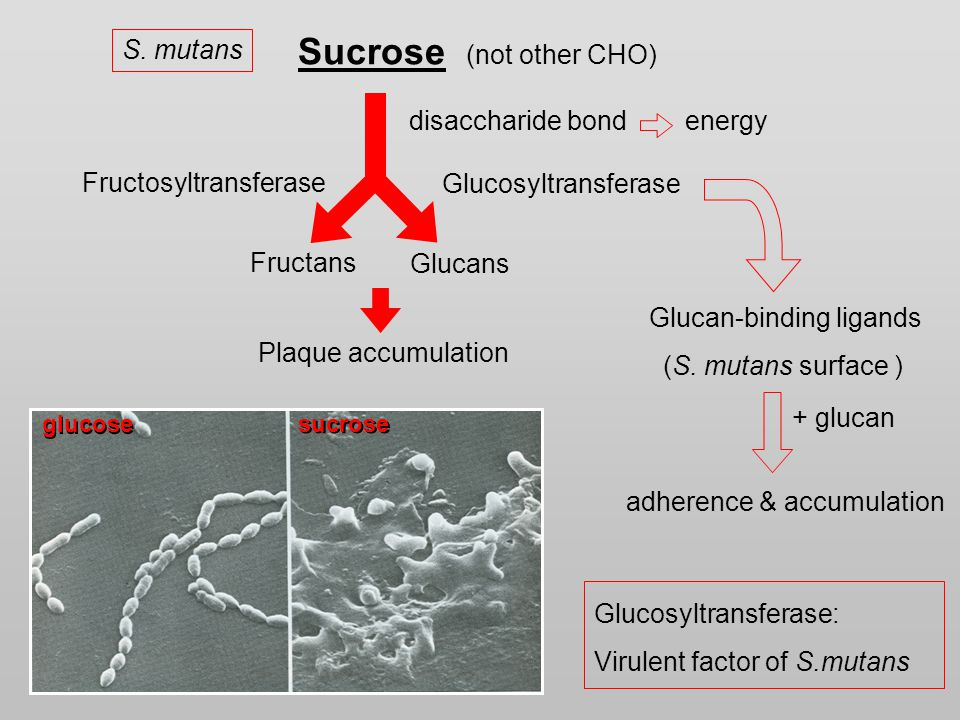 Sucrose (not other CHO) Fructosyltransferase Glucosyltransferase Fructans Glucans disaccharide bondenergy Plaque accumulation S.