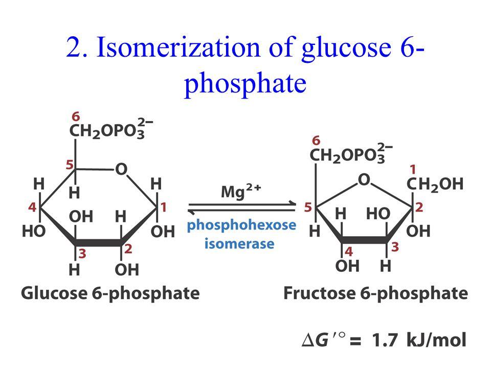 2. Isomerization of glucose 6- phosphate