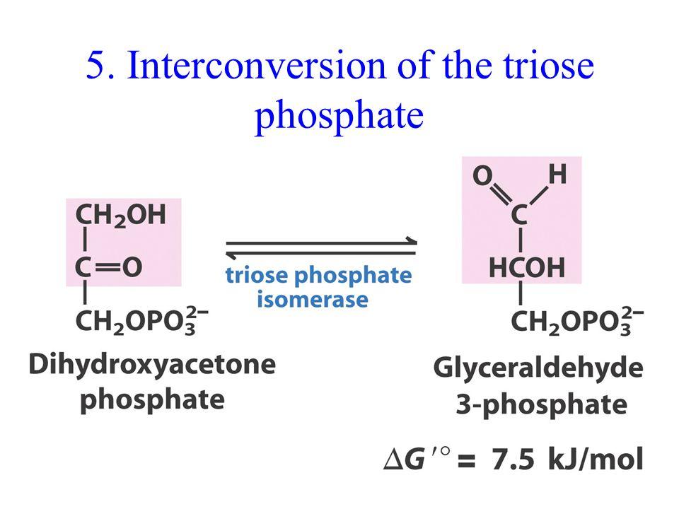 5. Interconversion of the triose phosphate