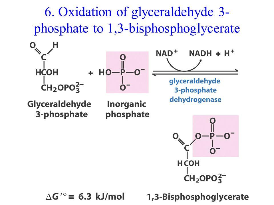 6. Oxidation of glyceraldehyde 3- phosphate to 1,3-bisphosphoglycerate