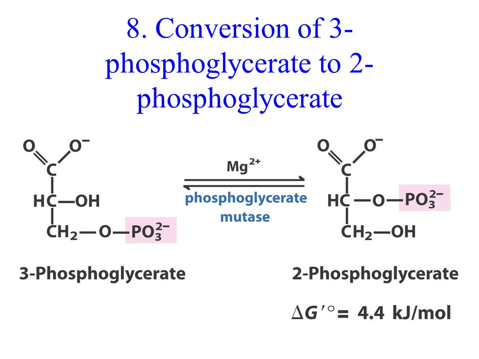 8. Conversion of 3- phosphoglycerate to 2- phosphoglycerate