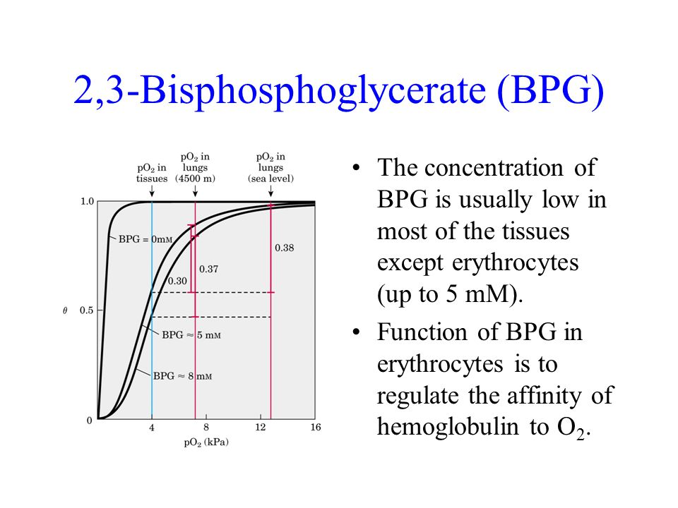2,3-Bisphosphoglycerate (BPG) The concentration of BPG is usually low in most of the tissues except erythrocytes (up to 5 mM).