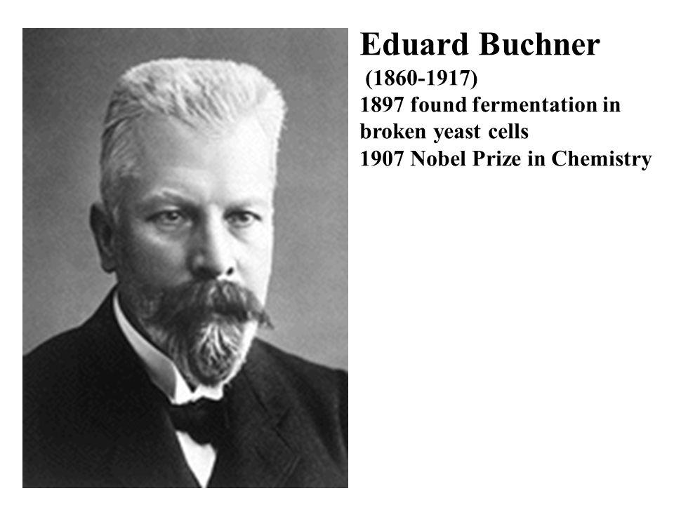 Eduard Buchner (1860-1917) 1897 found fermentation in broken yeast cells 1907 Nobel Prize in Chemistry