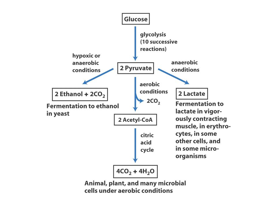 5. Interconversion of the triose phosphate