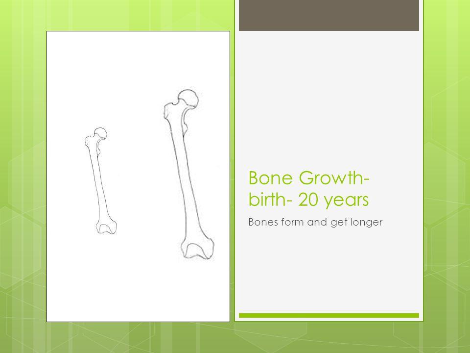 Bone Growth- birth- 20 years Bones form and get longer