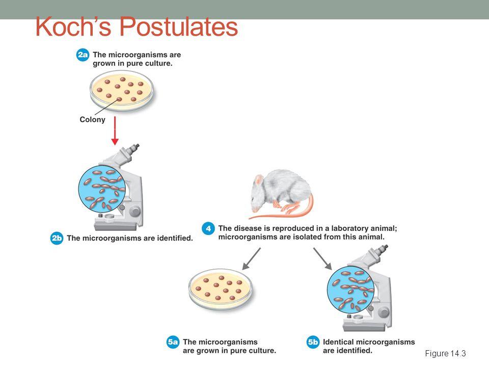 Koch's Postulates Figure 14.3