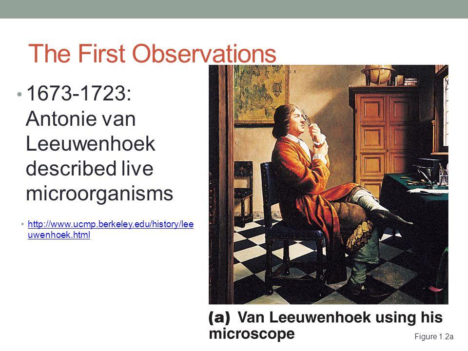 Figure 1.2a The First Observations 1673-1723: Antonie van Leeuwenhoek described live microorganisms http://www.ucmp.berkeley.edu/history/lee uwenhoek.htmlhttp://www.ucmp.berkeley.edu/history/lee uwenhoek.html