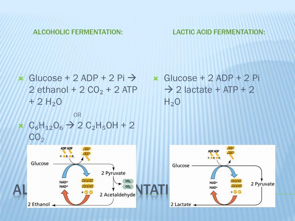 ALCOHOLIC FERMENTATION:  Glucose + 2 ADP + 2 Pі  2 ethanol + 2 CO ₂ + 2 ATP + 2 H ₂ O OR  C ₆ H ₁₂ O ₆  2 C ₂ H ₅ OH + 2 CO 2 LACTIC ACID FERMENTATION:  Glucose + 2 ADP + 2 Pi  2 lactate + ATP + 2 H ₂ O