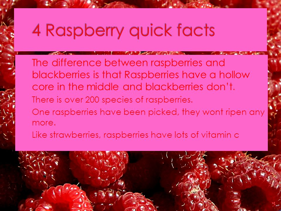  The difference between raspberries and blackberries is that Raspberries have a hollow core in the middle and blackberries don't.