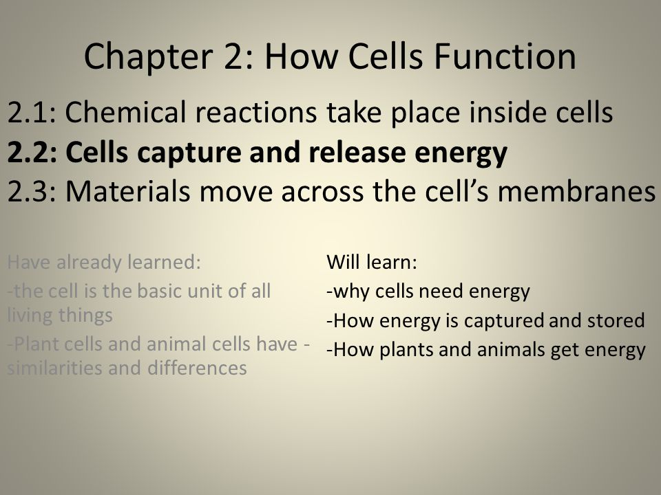 Chapter 2: How Cells Function Have already learned: -the cell is the basic unit of all living things -Plant cells and animal cells have - similarities and differences 2.1: Chemical reactions take place inside cells 2.2: Cells capture and release energy 2.3: Materials move across the cell's membranes Will learn: -why cells need energy -How energy is captured and stored -How plants and animals get energy
