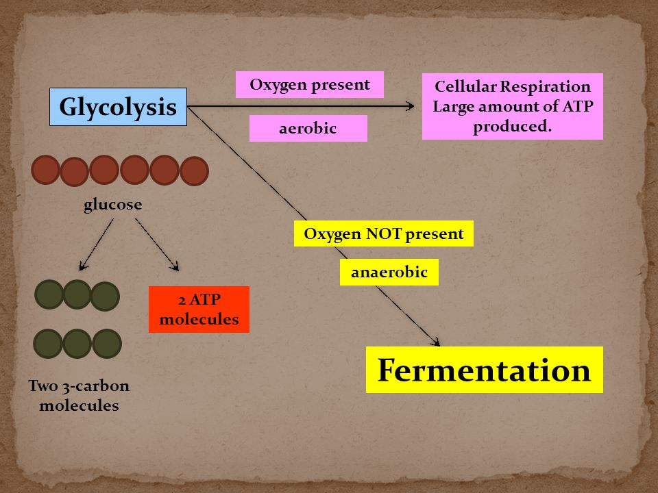 Glycolysis glucose Two 3-carbon molecules 2 ATP molecules Oxygen present Cellular Respiration Large amount of ATP produced. aerobic Oxygen NOT present