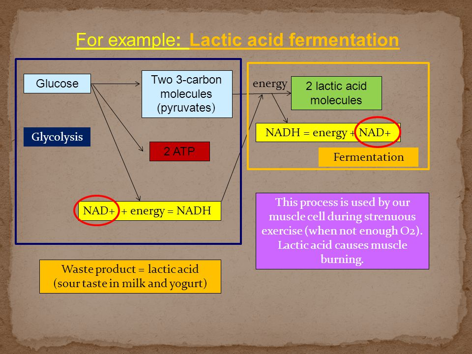 For example: Lactic acid fermentation Glucose Two 3-carbon molecules (pyruvates ) 2 ATP NAD+ + energy = NADH 2 lactic acid molecules NADH = energy + N