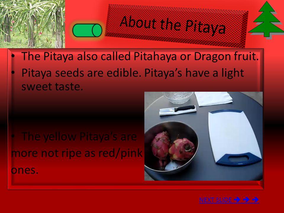 The Pitaya also called Pitahaya or Dragon fruit.Pitaya seeds are edible.
