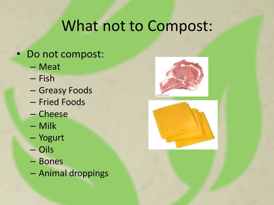 What not to Compost: Do not compost: – Meat – Fish – Greasy Foods – Fried Foods – Cheese – Milk – Yogurt – Oils – Bones – Animal droppings