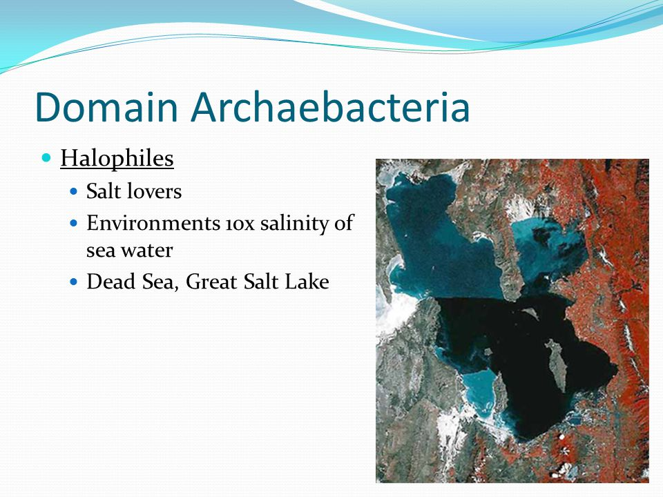Domain Archaebacteria Halophiles Salt lovers Environments 10x salinity of sea water Dead Sea, Great Salt Lake