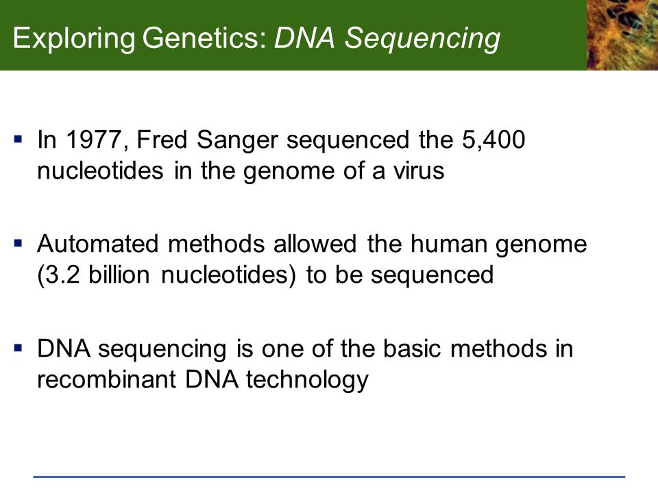Exploring Genetics: DNA Sequencing  In 1977, Fred Sanger sequenced the 5,400 nucleotides in the genome of a virus  Automated methods allowed the hum
