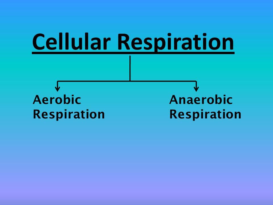Cellular Respiration Aerobic Anaerobic Respiration Respiration