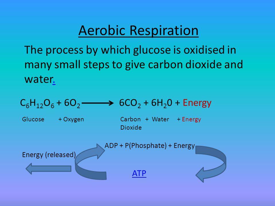 ADP = Adenosine Di Phosphate ATP = Adenosine Tri Phosphate..