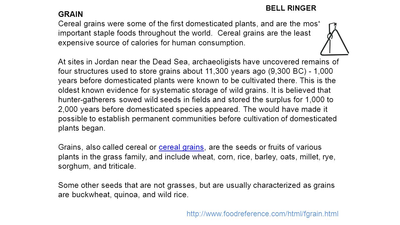 GRAIN Cereal grains were some of the first domesticated plants, and are the most important staple foods throughout the world.