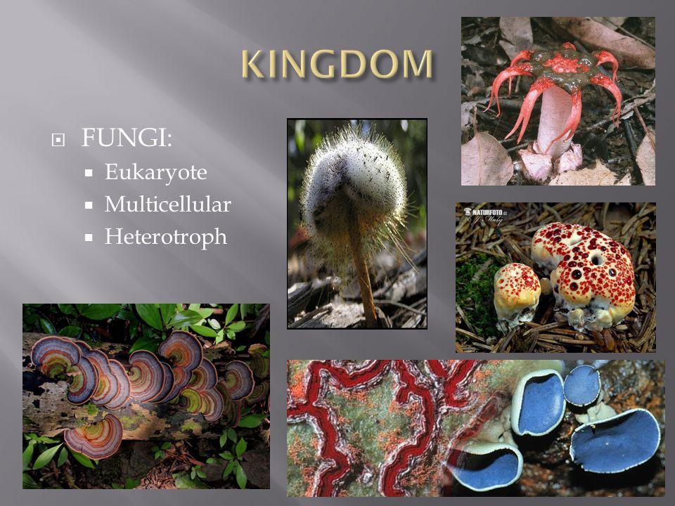  FUNGI:  Eukaryote  Multicellular  Heterotroph