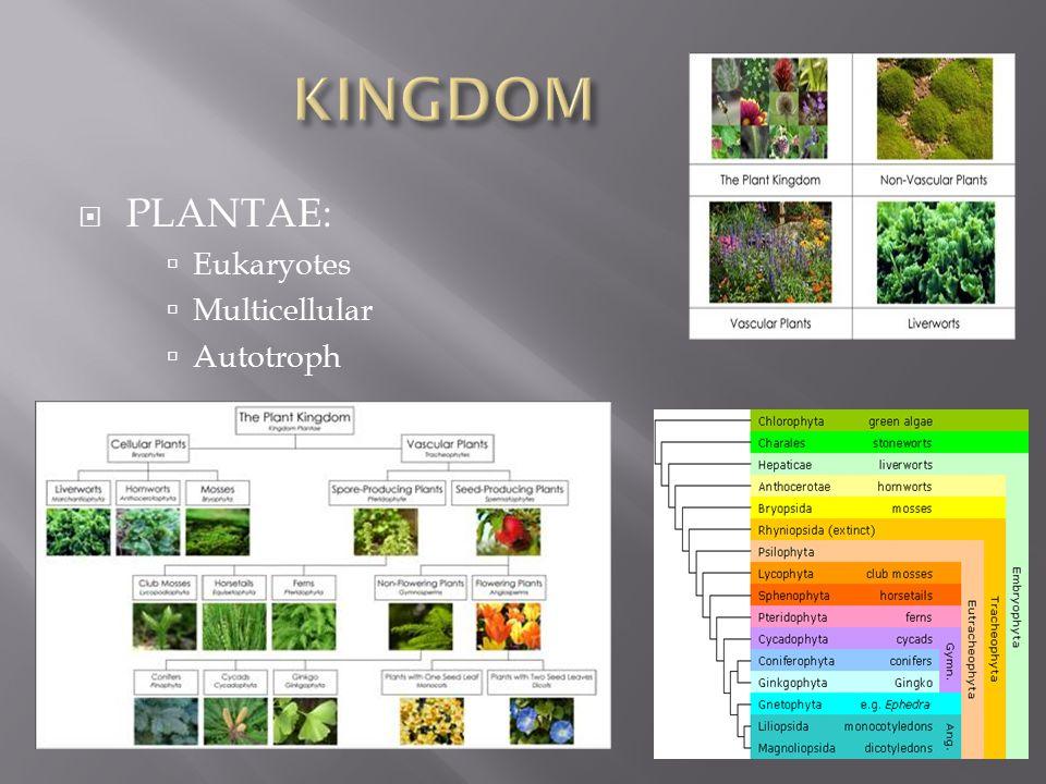  PLANTAE:  Eukaryotes  Multicellular  Autotroph