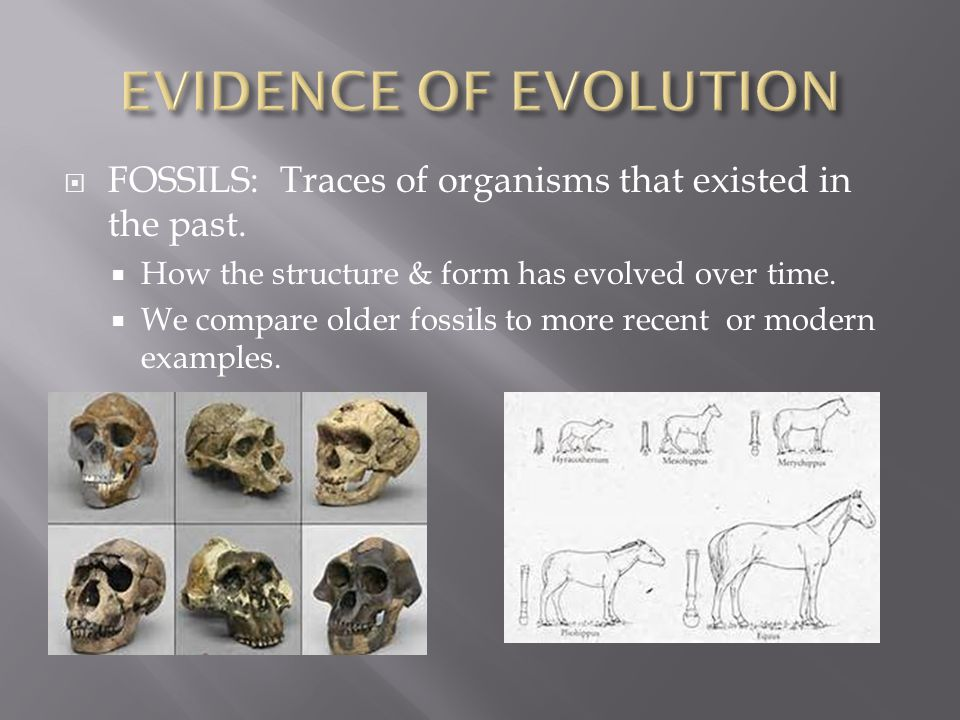  FOSSILS: Traces of organisms that existed in the past.