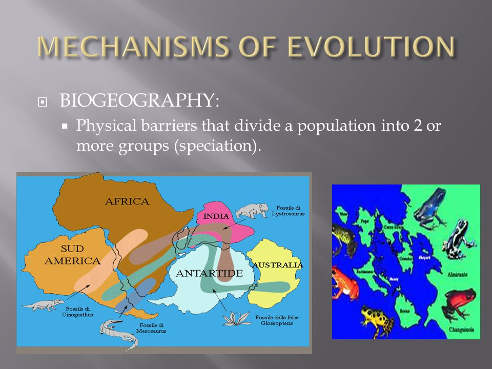  BIOGEOGRAPHY:  Physical barriers that divide a population into 2 or more groups (speciation).