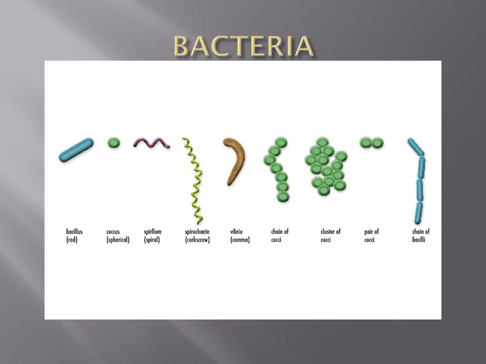  Domain Archaea is mostly composed of cells that live in extreme environments.