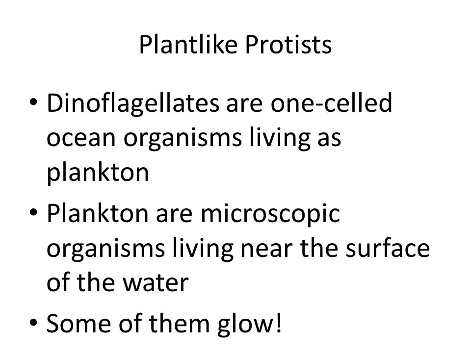 Plantlike Protists Dinoflagellates are one-celled ocean organisms living as plankton Plankton are microscopic organisms living near the surface of the water Some of them glow!