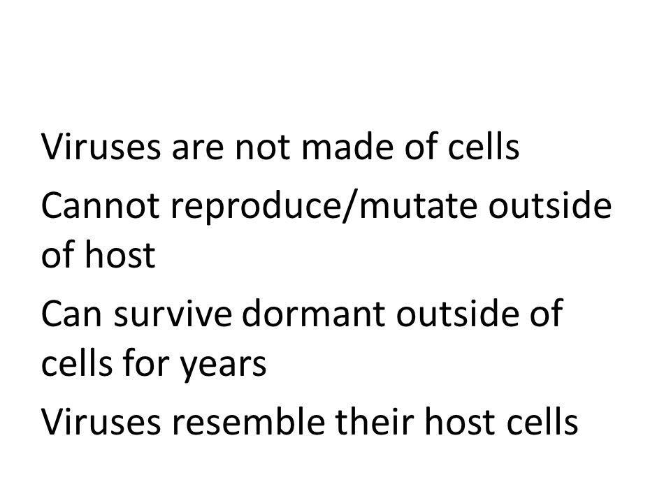 Plantlike Protists 3 Types: – 1. Dinoflagellates – 2. Euglenas – 3. Diatoms