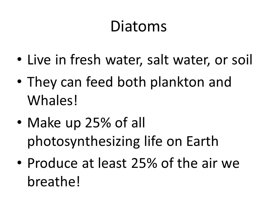 Diatoms Live in fresh water, salt water, or soil They can feed both plankton and Whales.