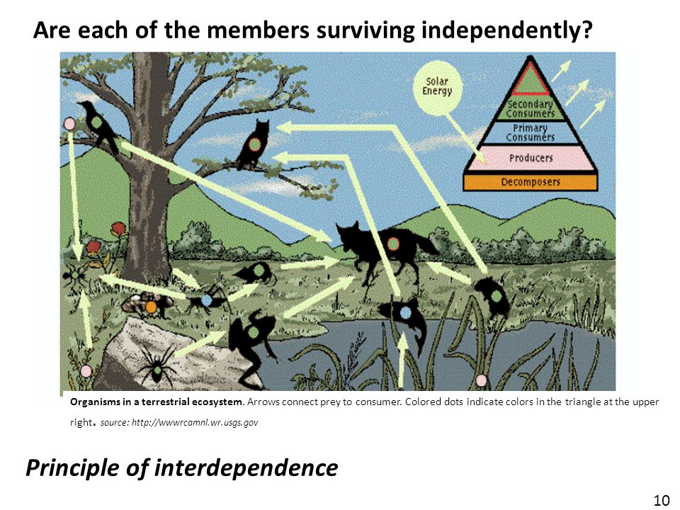 Principle of interdependence Organisms in a terrestrial ecosystem.