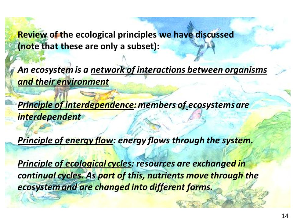 Review of the ecological principles we have discussed (note that these are only a subset): An ecosystem is a network of interactions between organisms and their environment Principle of interdependence: members of ecosystems are interdependent Principle of energy flow: energy flows through the system.