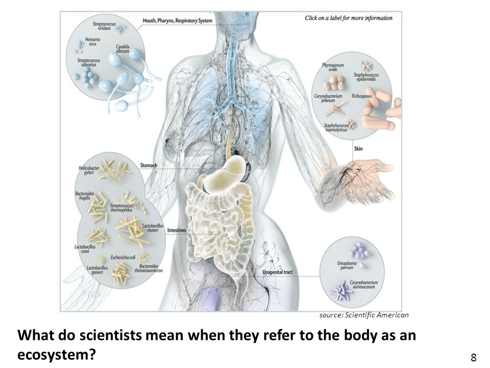 source: Scientific American 8 What do scientists mean when they refer to the body as an ecosystem?