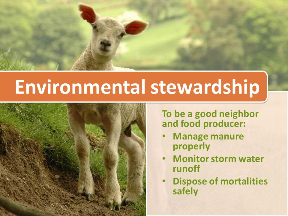 To be a good neighbor and food producer: Manage manure properly Monitor storm water runoff Dispose of mortalities safely Environmental stewardship