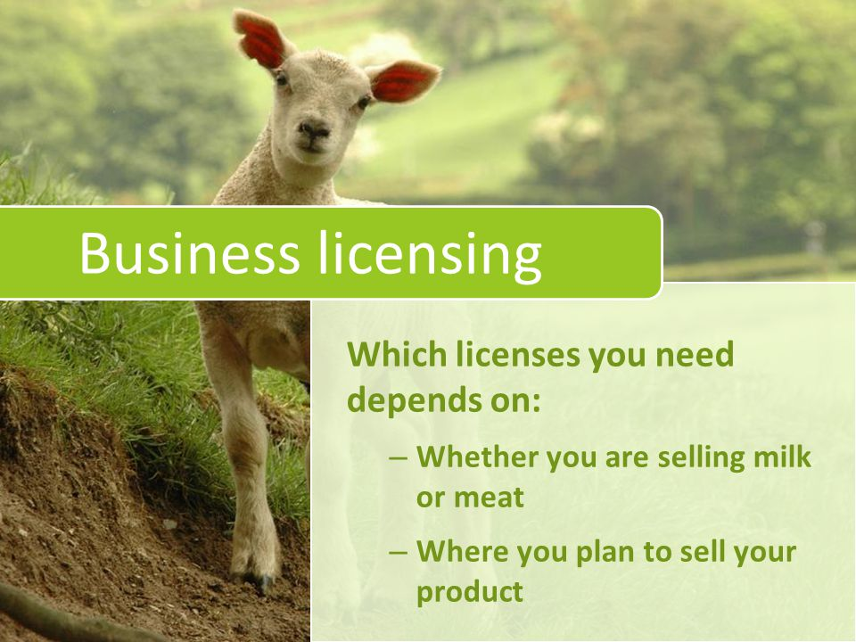 Business licensing Which licenses you need depends on: – Whether you are selling milk or meat – Where you plan to sell your product